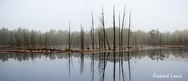 Goshen Pond Pine Barrens New Jersey