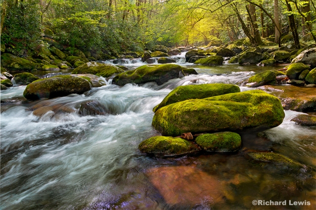 Tremont Creek, Smokey Mountain National Park