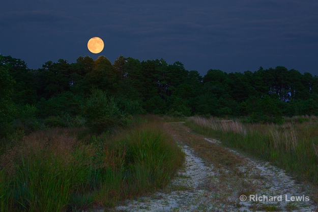 Super Moon in the Pine Barrens Copyright Richard Lewis