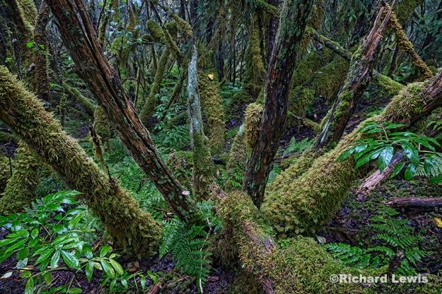 Alaskan Rain Forest by Richard Lewis