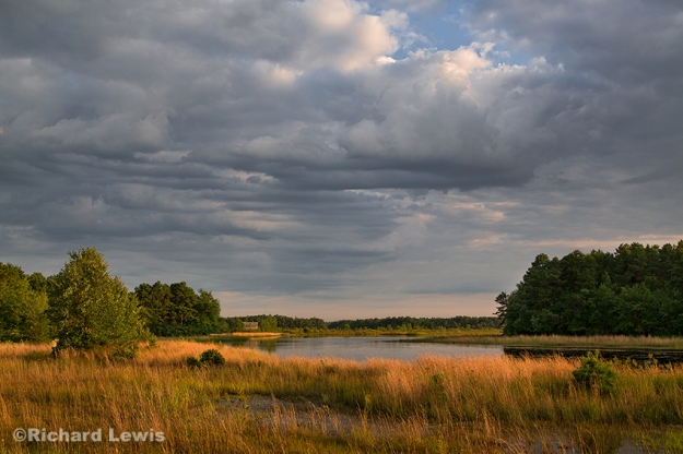 Golden Light in the Pine Barrens by Richard Lewis