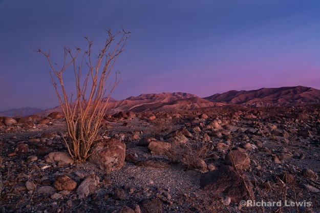 Early Morning in the Anzo Borrego Badlands by Richard Lewis