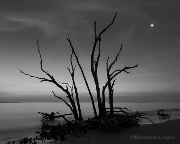 Big Talbot Island in the Twilight by Richard Lewis