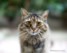 Curious Cat by Richard Lewis