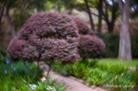Garden in Ojai California by Richard Lewis