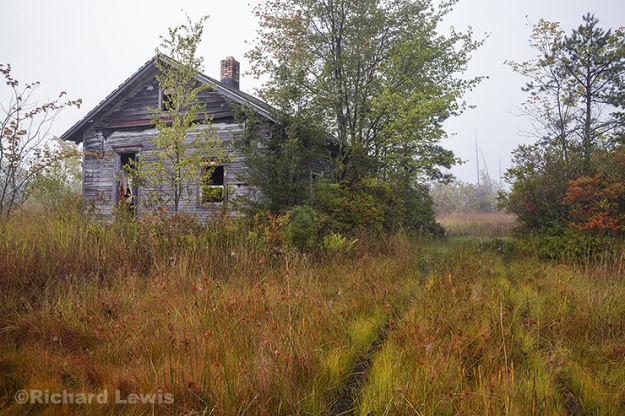 The Old Driveway by Richard Lewis