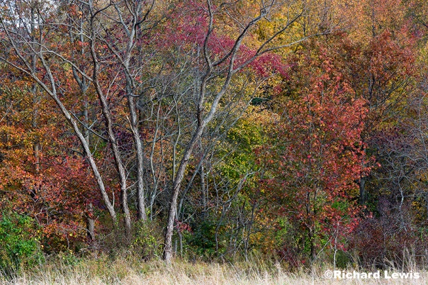 The Edge Of A Fall Forest by Richard Lewis