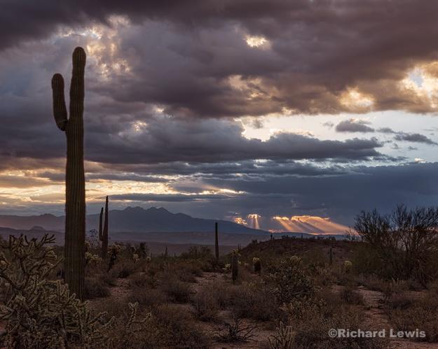 Morning Light in the Arizona Desert by Richard Lewis McDowell Mountain Park