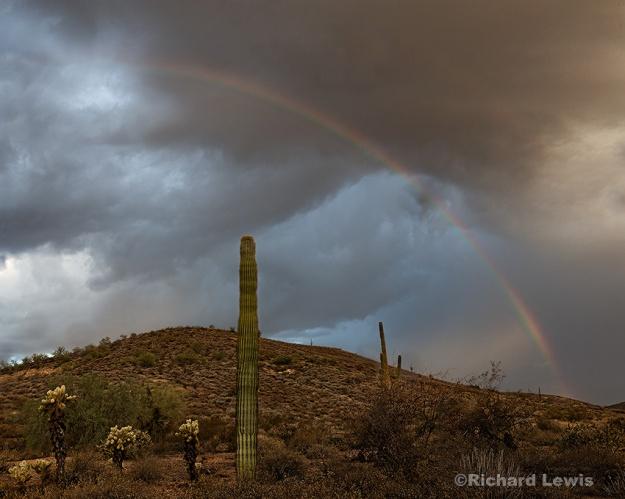 Desert Rainbow by Richard Lewis McDowell Mountain Park Arizona