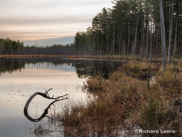 Morning on Robert's Branch by Richard Lewis