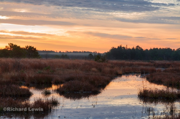 Swampy Morning by Richard Lewis 2015