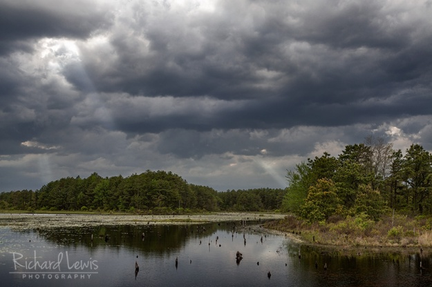 Storm Light in the Pinelands by Richard Lewis
