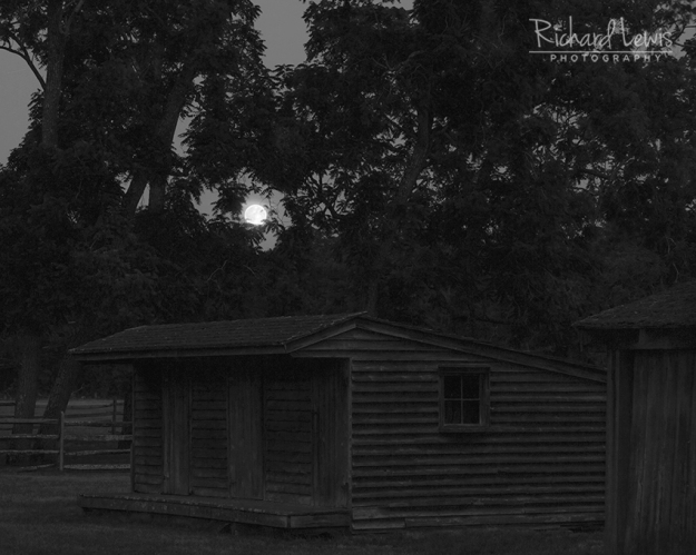 Batsto Full Moon In The Trees by Richard Lewis