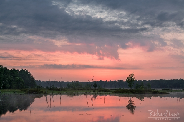 Before The Dawn inthe Pinelands by Richard Lewis