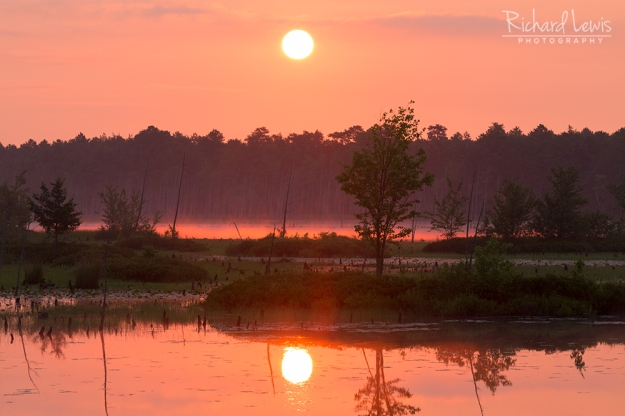 Burning Mist in the Pinelands by Richard Lewis