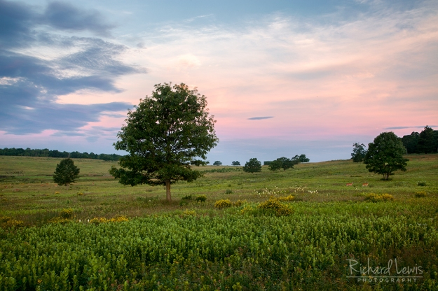 Quiet Dawn in Big Meadows Shenandoah National Park by Richard Lewis'