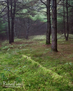 Forest Carpet in the Delaware Water Gap by Richard Lewis