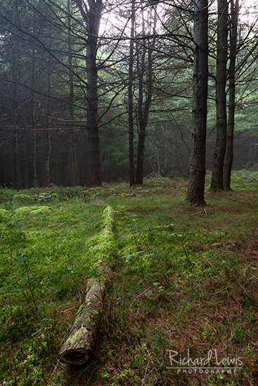 Forest Carpet Delaware Water Gap by Richard Lewis