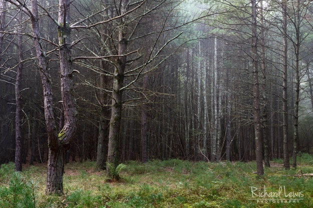 Misty Forest in the Delware Water Gap by Richard Lewis