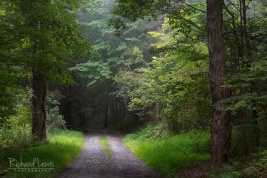 Quiet Forest Road in the Delaware Water Gap by Richard Lewis