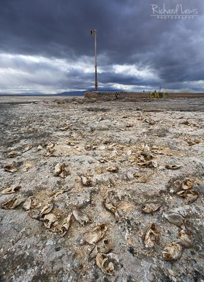 Bombay Beach Environmental Fallout by Richard Lewis