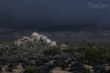 Approaching Storm in Joshua Tree by Richard Lewis