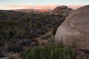 Windy Morning in Joshua Tree by Richard Lewis