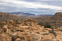 Tortured Landscape in Joshua Tree by Richard Lewis