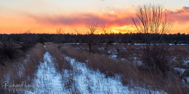 Fading Light in the Franklin Parker Preserve New Jersey Pinelands by Richard Lewis